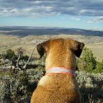 Buster daydreaming -- (actually sighting for antelope...)