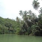 Even the baot ride to Nuts and huts from Loboc tourist complex is scenic