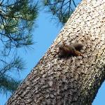 Ecureuil pris sur le vif au petit-dej