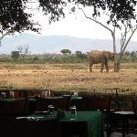 """il """"ristorante"""" del nostro campo tendato, con vista sugli elefanti..."""