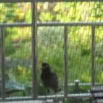 les oiseaux à votre porte