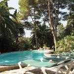 Pool in der grünen Gartenoase
