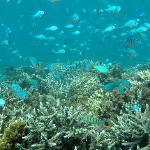 Snorkelling - Mackerel Islands