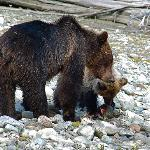 Mother and cub with salmon on river bank