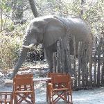 les éléphants envahissent le lodge