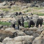 Elephants at the river taken from our veranda