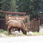 River Spruce entrance