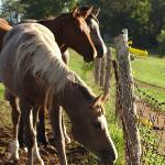 horses on property