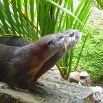 Otter show