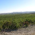 More vineyard!