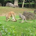 おなじみのオーストラリア
