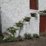 Farmhouse wall of flowers