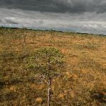 Bog field