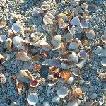 Just a few of the thousands of shells