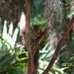 squirrels at the bird sanctuary