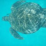 Turtle seen of snorkling trip