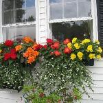 Beautiful Flowers in Bar Harbor