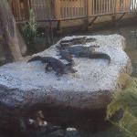 Alligators in the Atrium