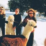 Alpaca Adventures and Gift Shop