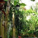 A look into the gardens