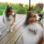 Owners' dogs - well-behaved and adorable