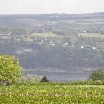 Seneca Lake/very like the Rhine Valley