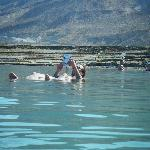 a galla nel Mar Morto