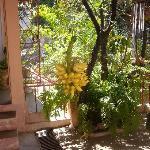 Corbeille de fruits du jardin