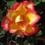Beautiful flowers & roses