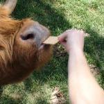 Feeding from the Safari Bus Tour