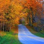 road in front of the B&B in Fall