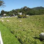 view of area where sheep graze