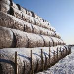 The stacked bales in winter