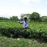 in tea garden