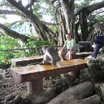Photo of Caishan Natural Park