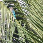 朝食会場の窓の外にこんな鳥が来ました。