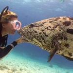 Lizard Island - Diving 2