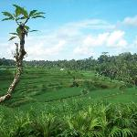 the rice paddy view