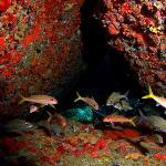 "Cayo Yerba ""Arch"" Dive Site"
