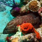 Carlos Rosario Dive Site