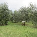 Olive trees and a chair on the farm