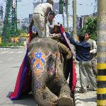 Elephant ride at hotel (concierge arranged it)