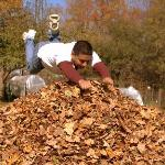 jumping in the Leaves Pile - Fall time