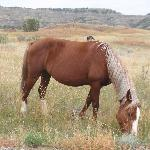 Wild horse near the road