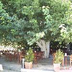 breakfast under mulberry bush