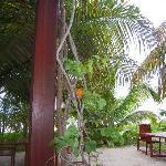 Restaurant Gartenbereich