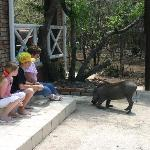 "We loved ""meeting"" the Warthog!"