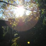 garden cottage back yard