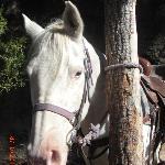 My horse Casper