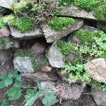 part of the old wall surrounding the garden